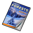 journal_exp_tier_2_winter_forest